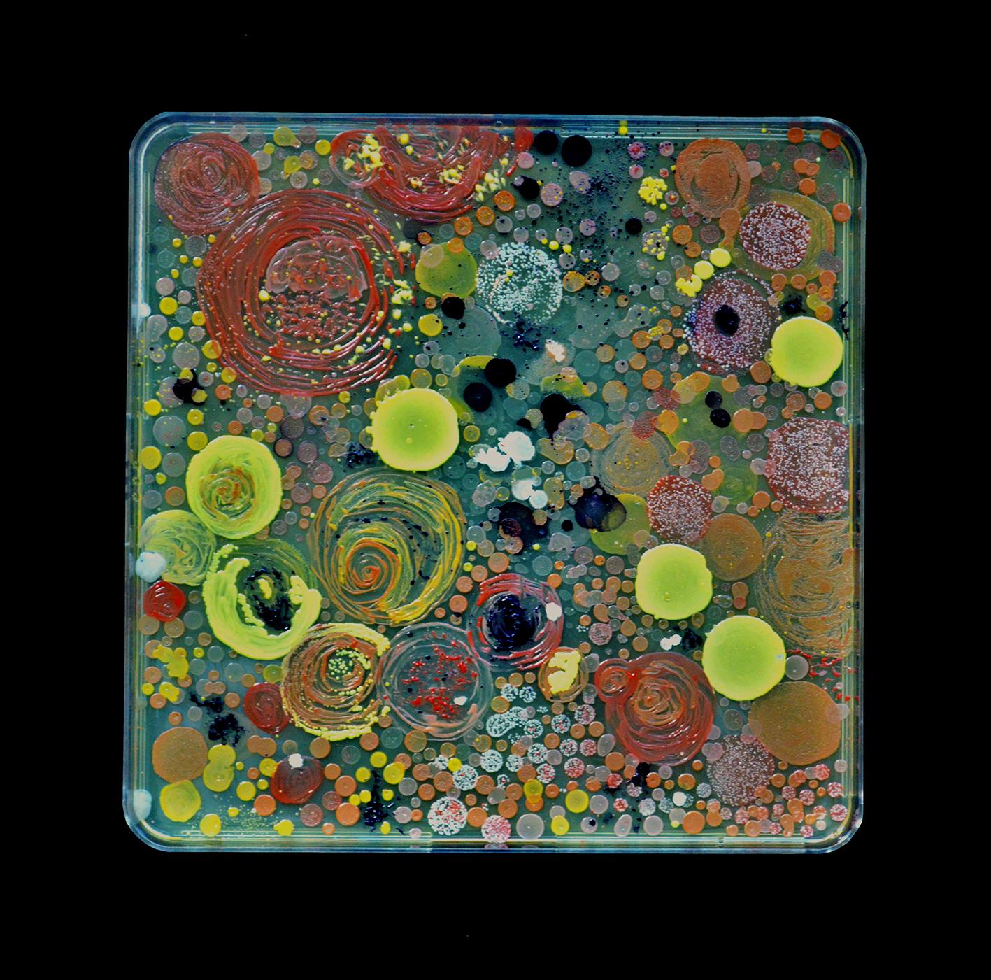 Penil Cobo,  Interactions , Microbes in agar