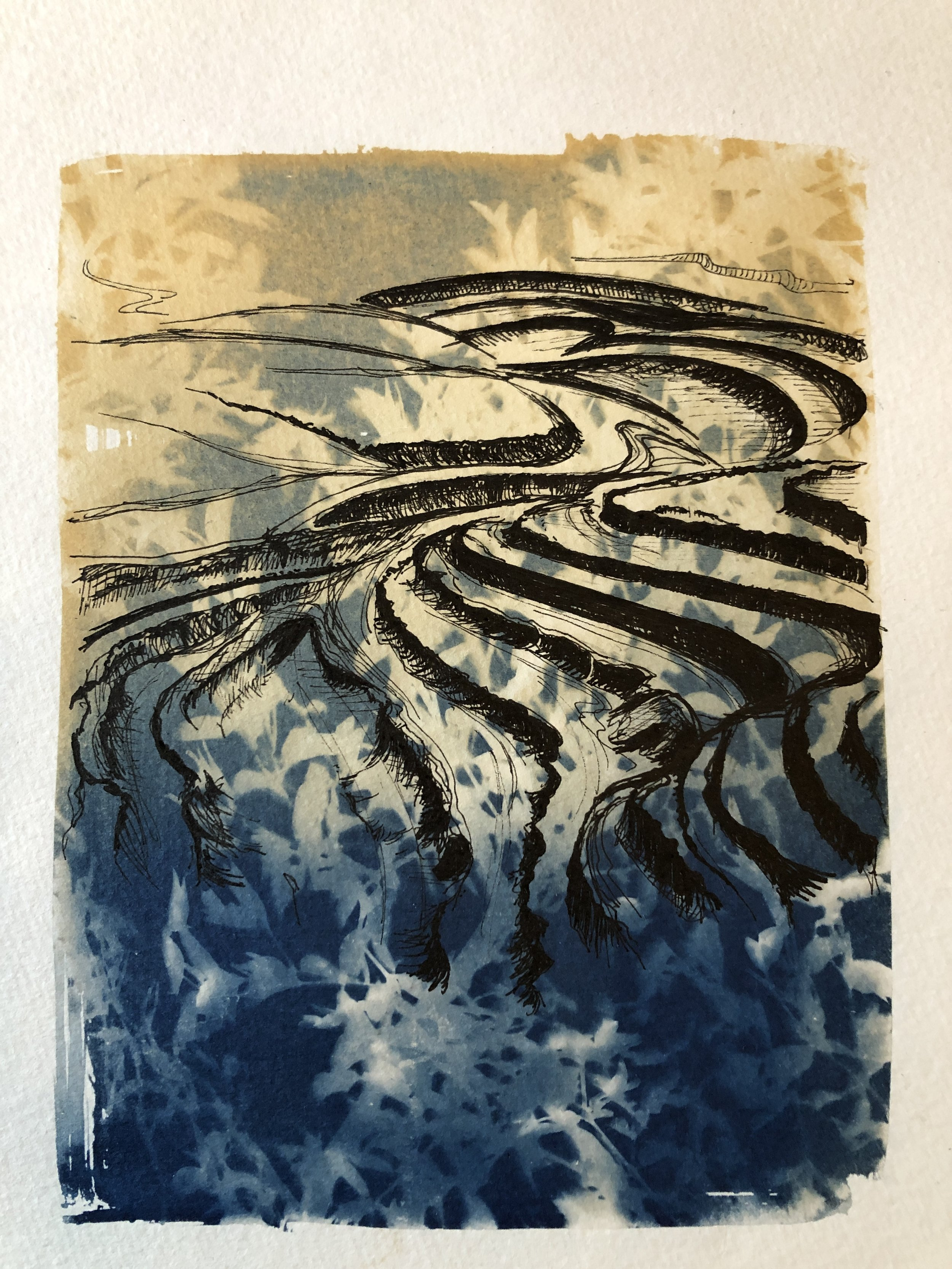 Marie Craig,  Entanglement 6 (strip mine),  pen and ink on toned cyanotype photograph, 6 x 8 inches.