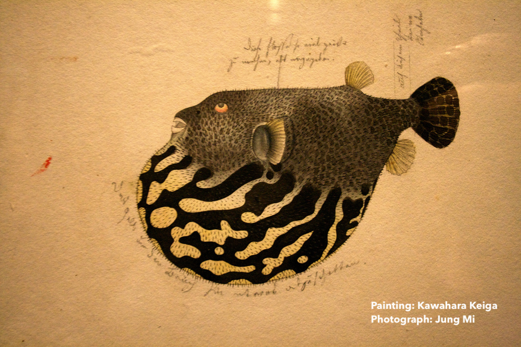 An early 19th-century rendering of a blowfish in full bloat.