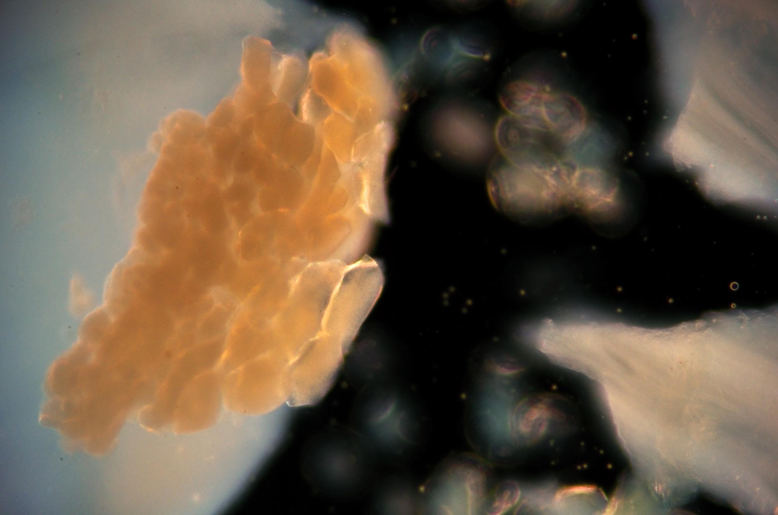 cosmic egg (2).jpg