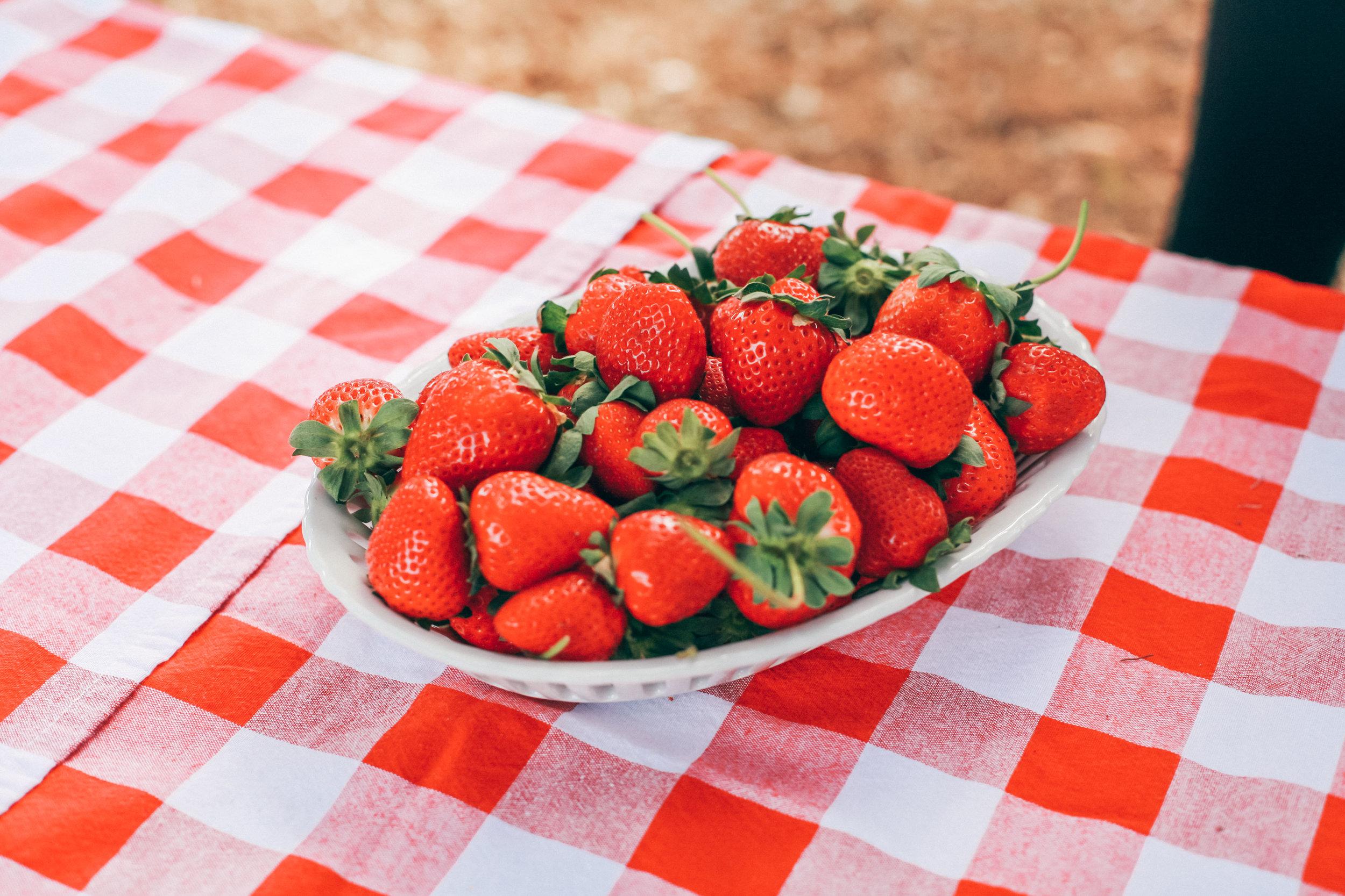 This Jenn Girl - Florida Strawberries 10