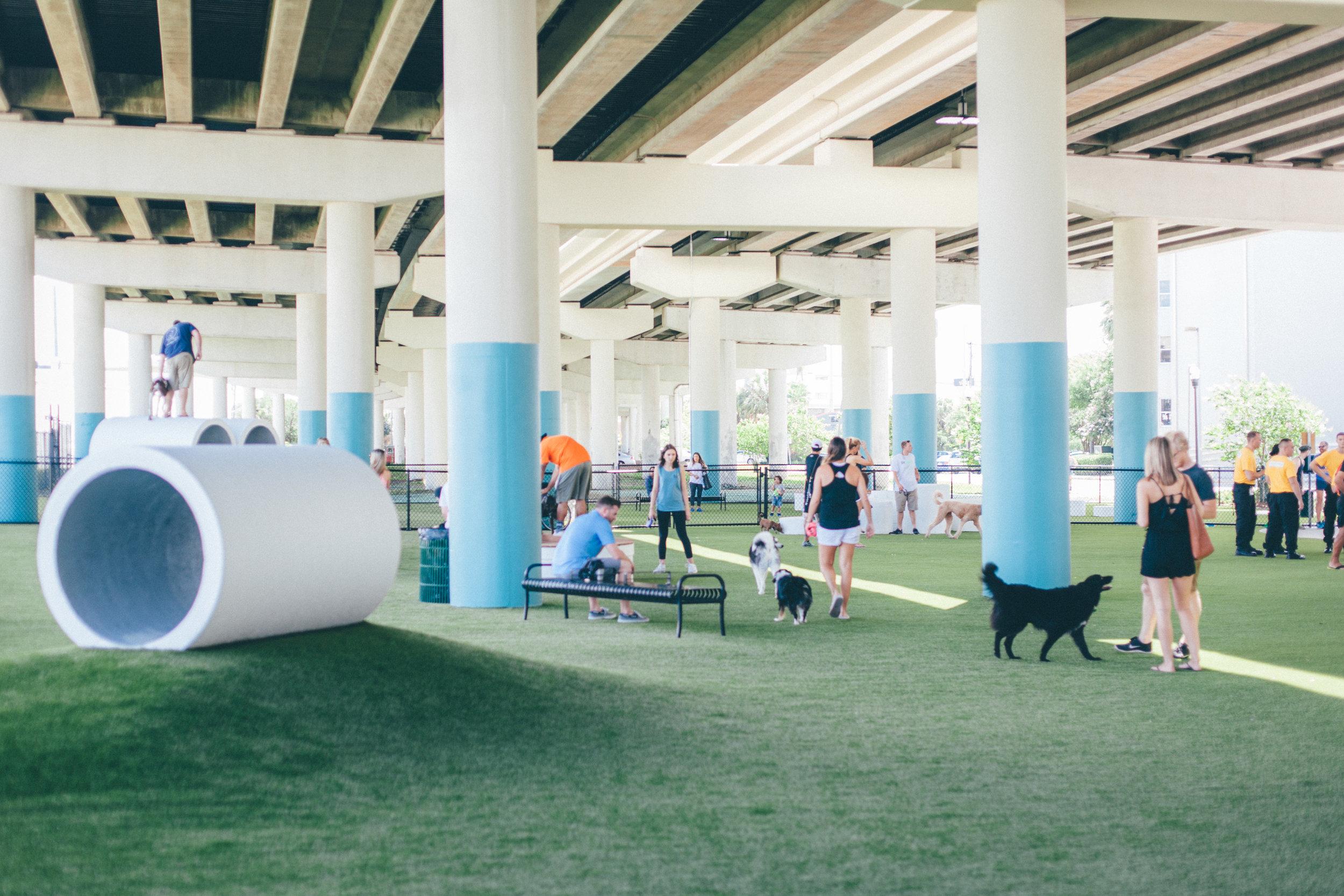 Large Dog Play Area