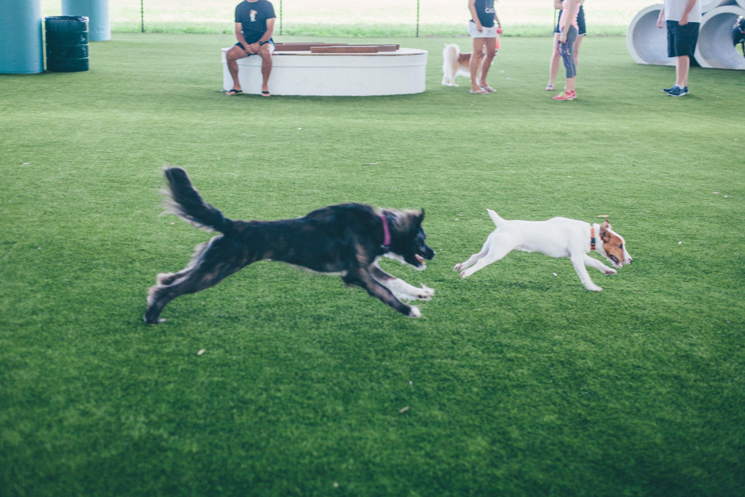This Jenn Girl - Deputy Kotfila Memorial Dog Park 6