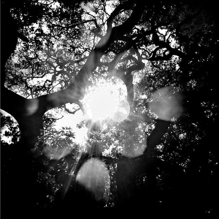 """""""Eclipse Light, 2012"""" by Rachael Short (http://www.rachaelshort.com)"""