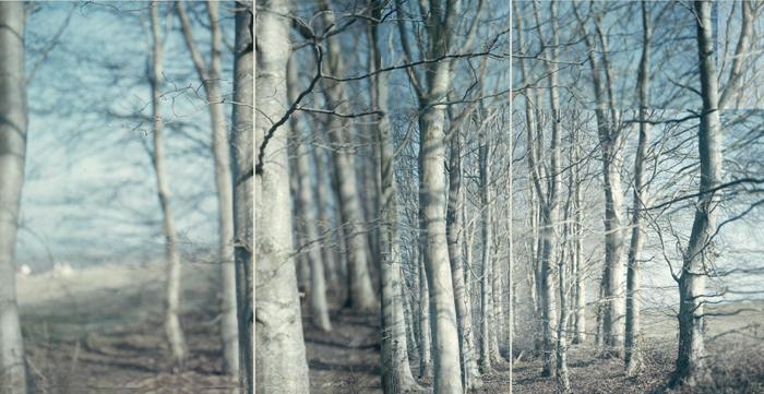 """""""Birch"""" by Vicky Slater (http://www.vickyslater.com)"""