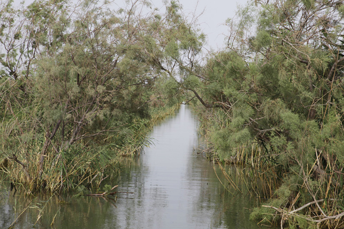 S. Iraq Marshes