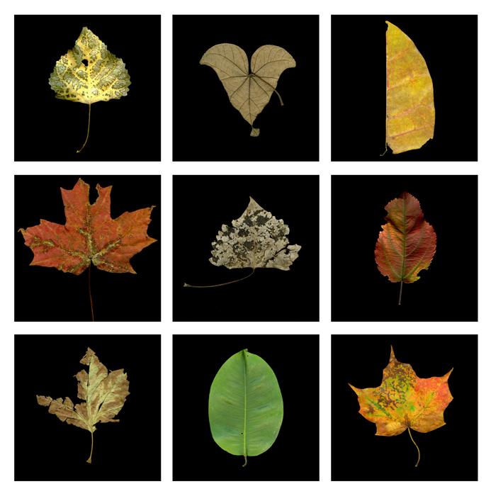 Leaf Grid