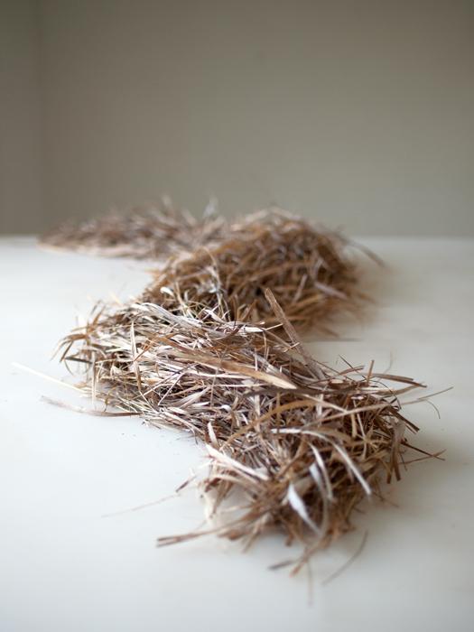 mydeadgrass.jpg