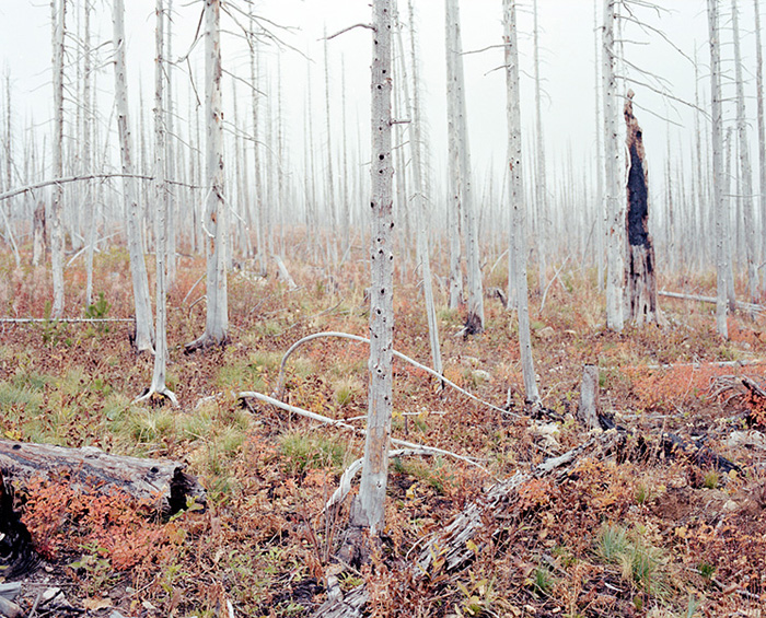 Burnt forest, 2011