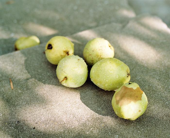 Pears, 2011