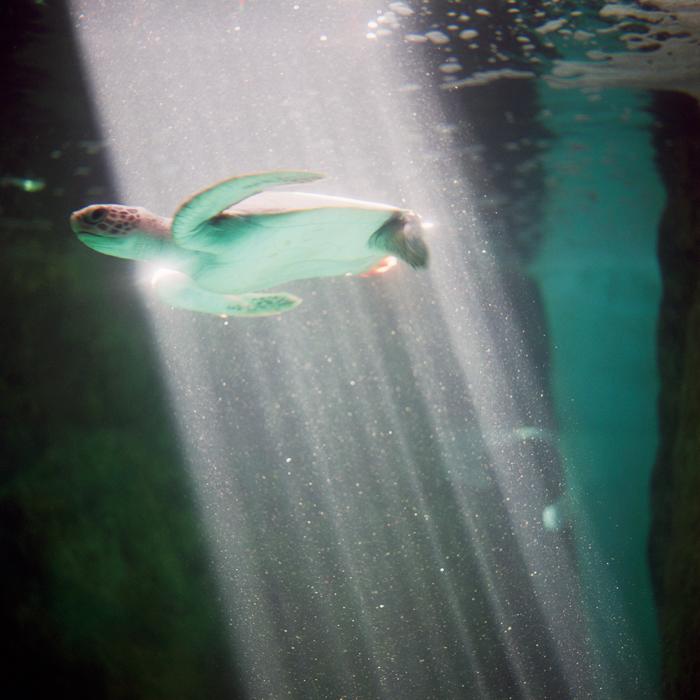 Tortuga Verde, 2008