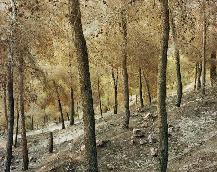 Burnt Landscape #2, Jerusalem Forest, 2011