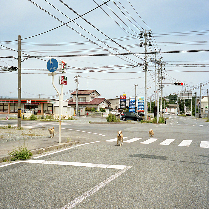 Abandoned dogs - 9km from Fukushima Daiichi Nuclear Power