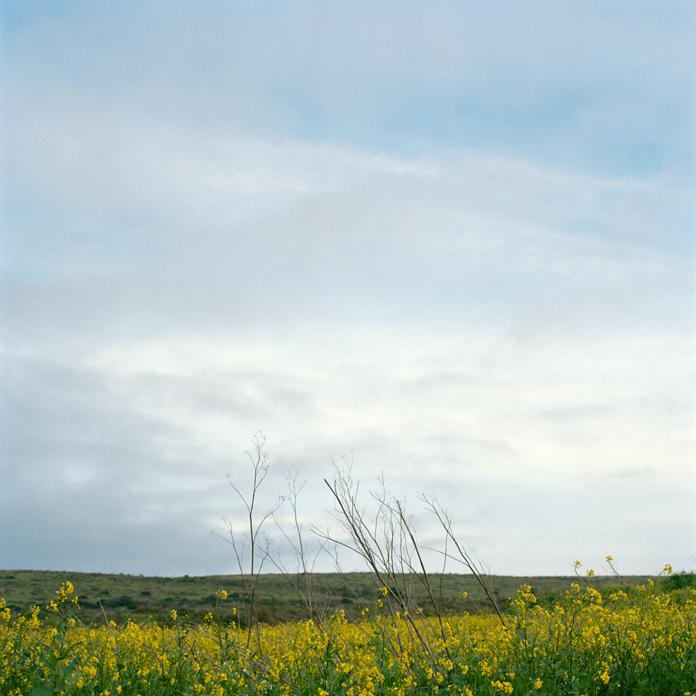 Field off Highway 1, California, 2010