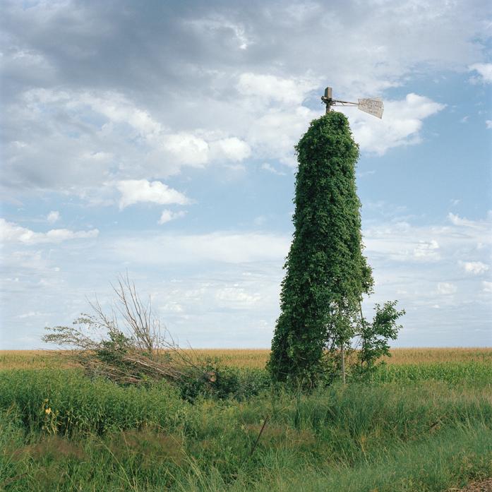 Summer Field, South Dakota, 2011