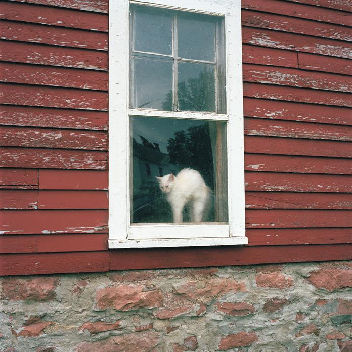Farm Cat, South Dakota, 2010