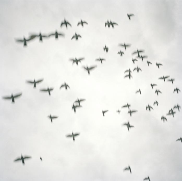 Flight, California, 2012