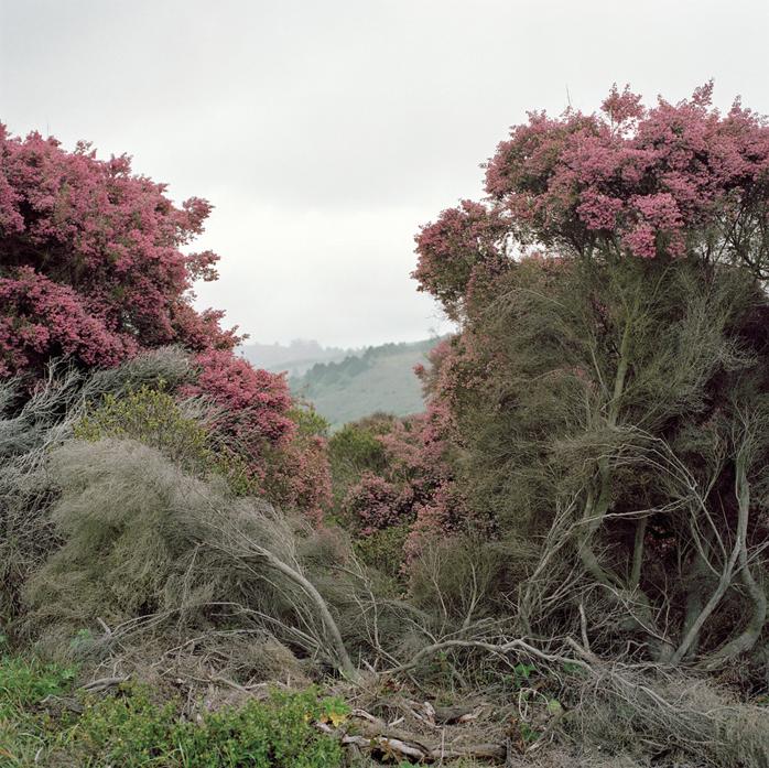 Highway 1, California, 2009