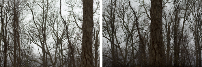 The Tree Alone, Bare (Part I and II)