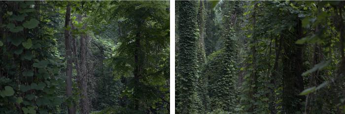 The Tree Alone, Kudzu (Part II and III)