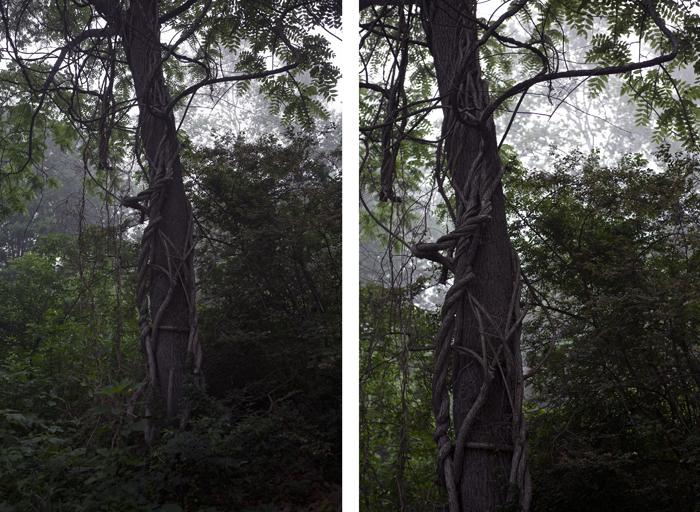 The Tree Alone, Vine
