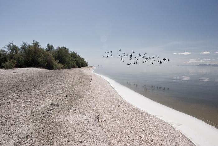 fishbone beach