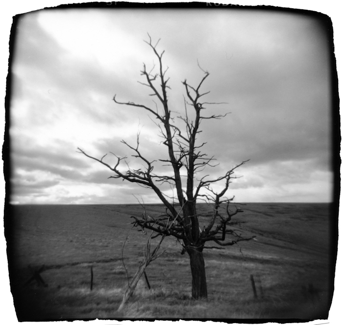 Tree, Oregon
