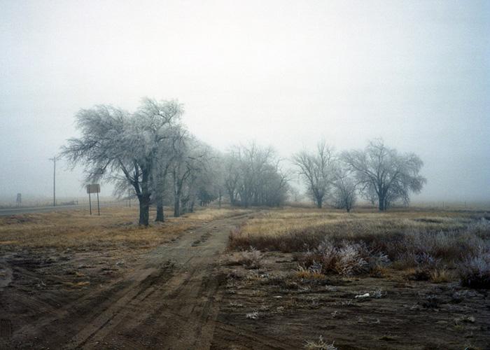 Frost on Cottonwood Trees, Oklahoma