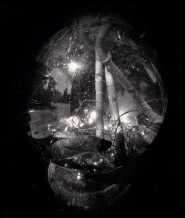Object Diaspora #36, 2010