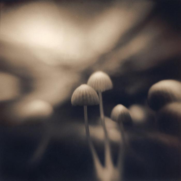 Three Mushrooms, 2005
