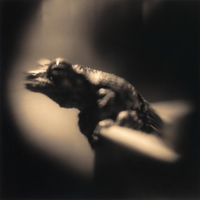 Frog, 2010