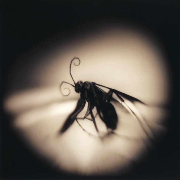 Wasp, 2008