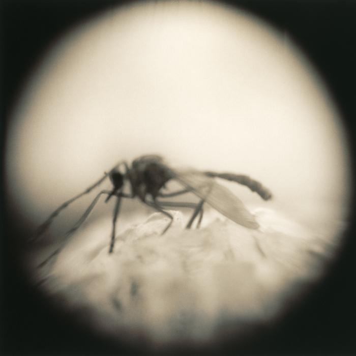 Walking Wasp, 2011