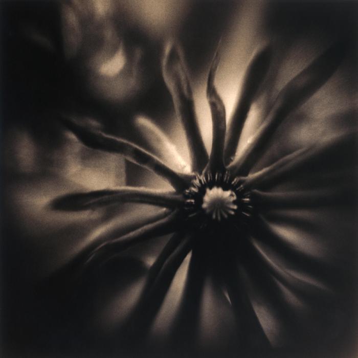 Star Anise, 2008