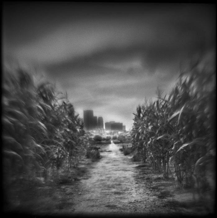 Last Harvest, 2010