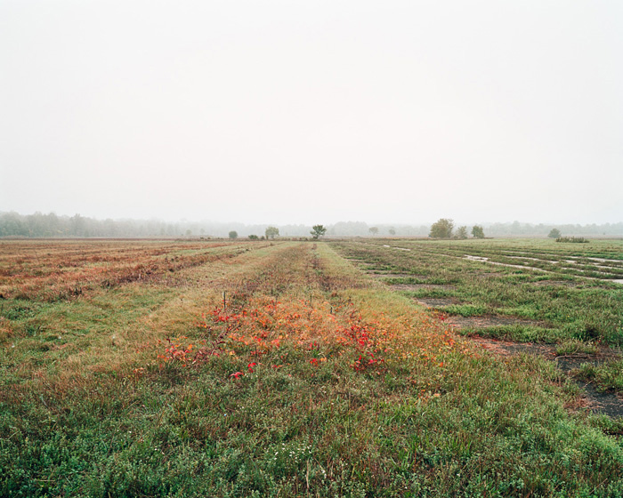 Grassland 394