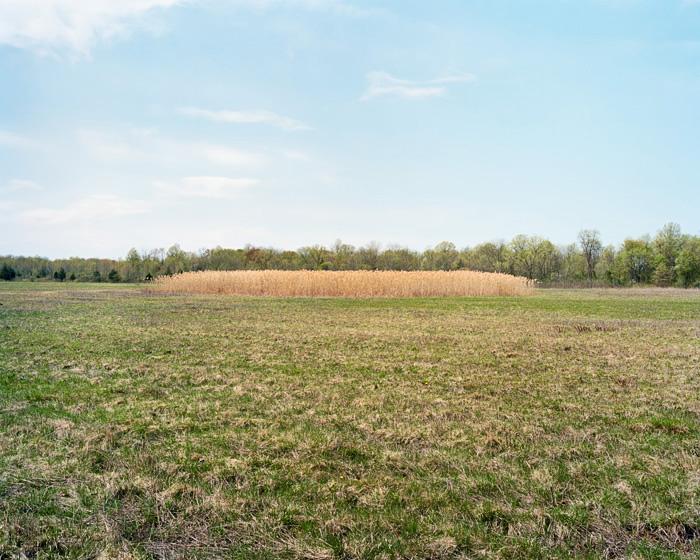 Grassland 435