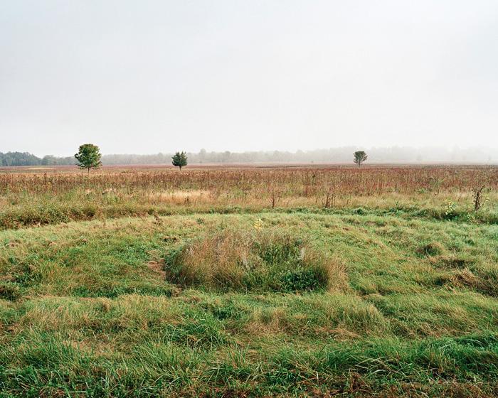 Grassland 194