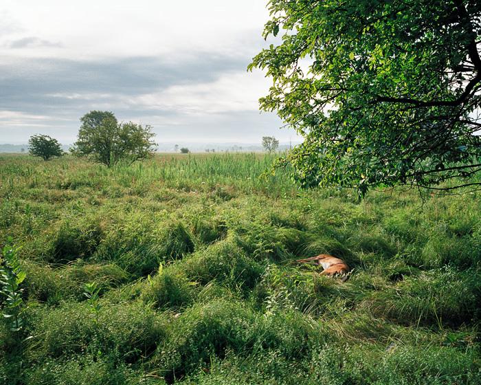Grassland 204