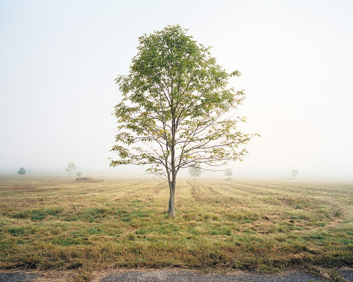 Grassland 395