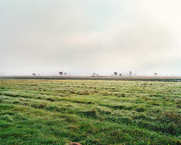 Grassland 221