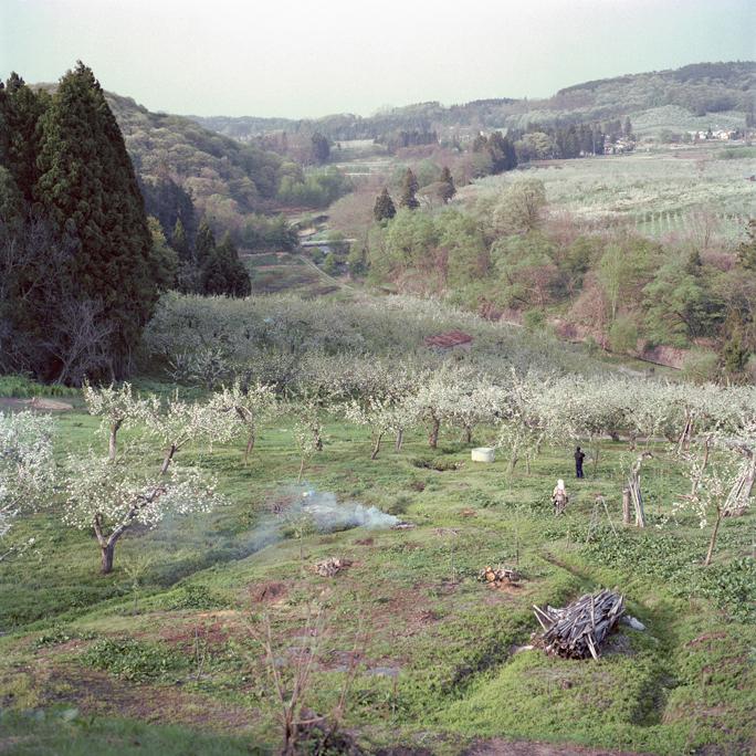 Burning Trimmed Branches, Spring, Aomori Prefecture