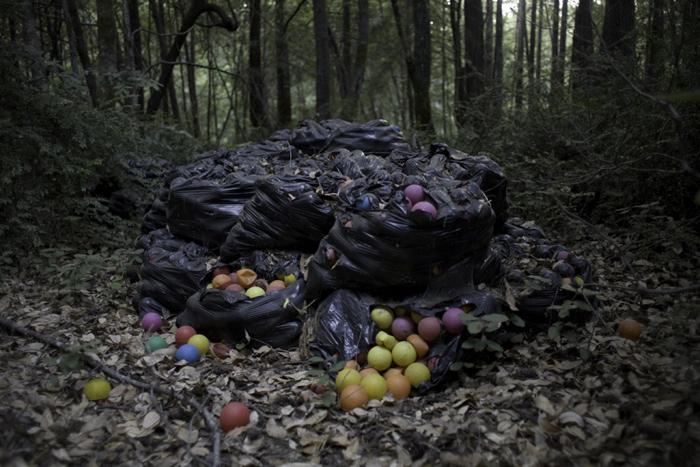 Mendocino Woods
