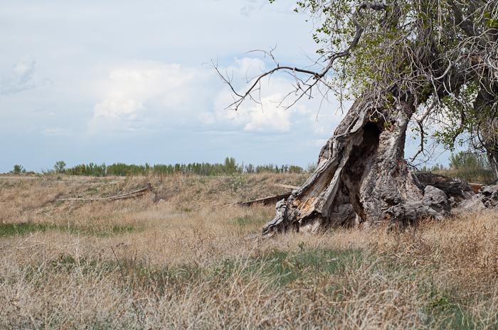 Pawnee National Grasslands at Briggsdale, CO