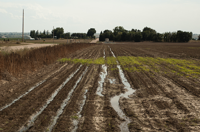 Mid-summer Farmland and Natural Gas Equipment
