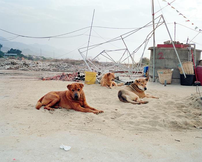 Three Stray Dogs, Lau Fau San, 2008