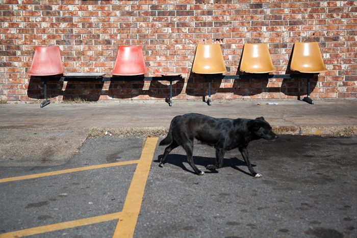 Dog and Chairs
