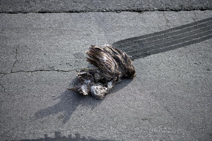 Skidmark / Dead Bird