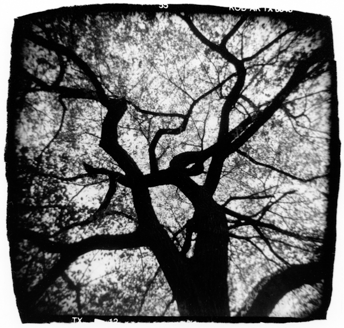 Branching Out by Michelle Bates