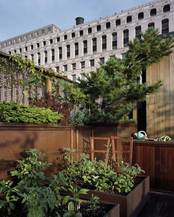 Vegetable-Garden-Chicago-2009.jpg